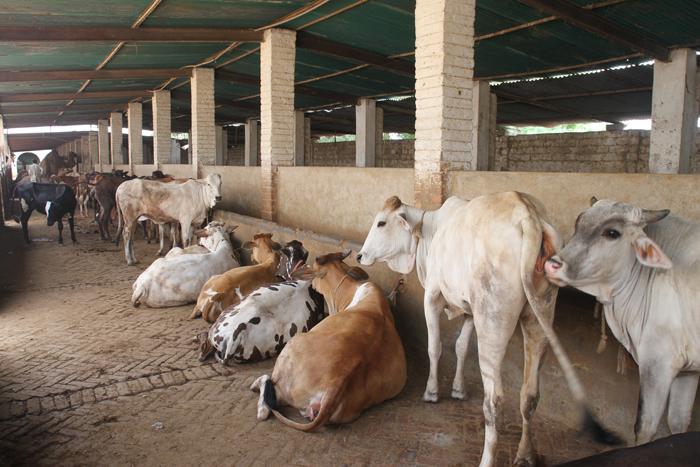 Edhi Animal Hostel – Edhi Welfare Organization